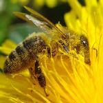 Φανταστείτε έναν κόσμο χωρίς μέλισσες
