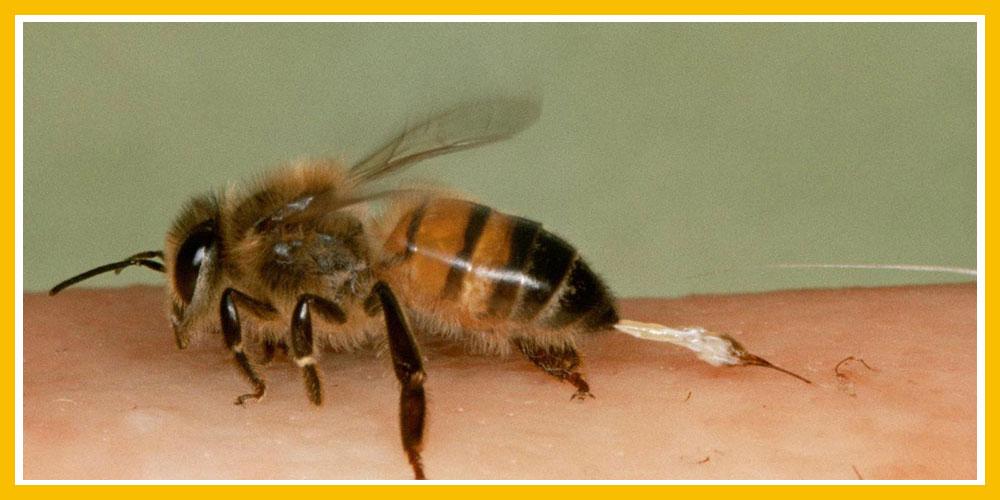 Το δηλητήριο της μέλισσας