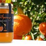 Μέλι Πορτοκαλιάς